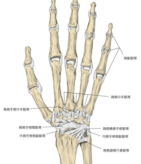 hand-ligament