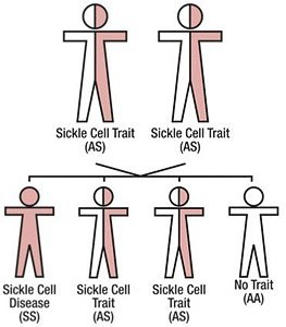 sickle-cell-trait-heredity